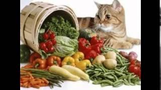 витамины для кошек где купить