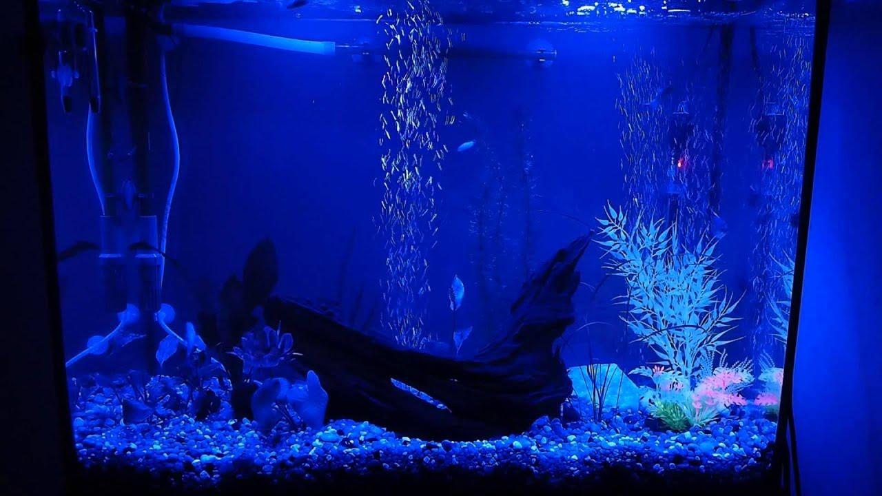 Finnex FugeRay Planted+ Moonlight mode aquarium light