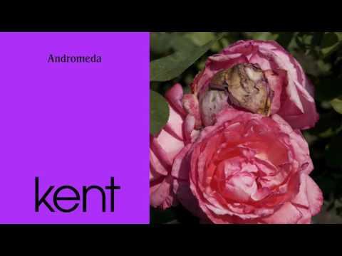 Kent - Andromeda (Official Audio)