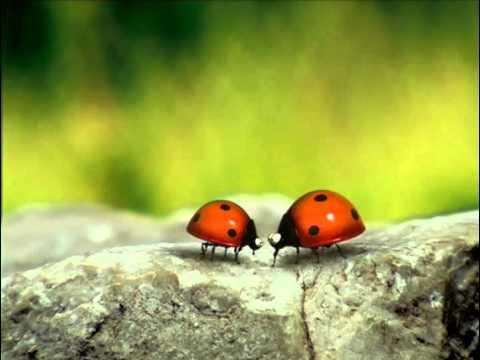 Youtube filmek - Csodabogarak - Szerelmi történet (1.évad 3.rész)