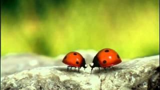 Csodabogarak - Szerelmi történet (1.évad 3.rész)