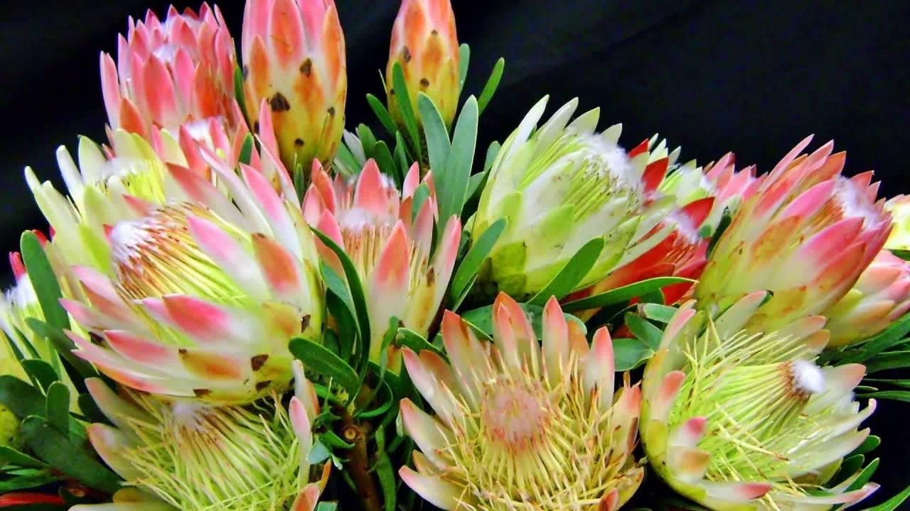 экзотические цветы фото с названиями для букетов владельцу интересно