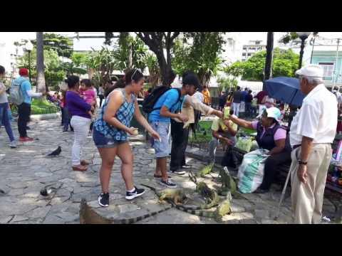 Ecuador, Guayaquil | Iguana Park | Flimzee Tour Guide