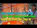 Kacer Biring Biring Tampil Mewah Launching Latber Pandawa  Bc  Mp3 - Mp4 Download