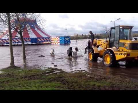 Mallow racecourse Co.Cork flooded 03/03/2017 HORSE RESCUE
