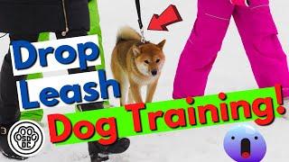 Drop Leash Dog Training Behavior Modification