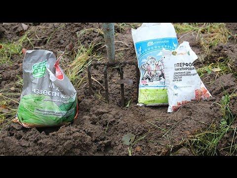 Вопрос: Как узнать, какая почва на участке и какие растения лучше сажать?