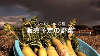 昔ながらの野菜を無農薬で育てています(2011〜) 阪急六甲の鍼灸院前で直売しています(火曜日と金曜日お昼頃) 当菜園の野菜は食いつきが違う...