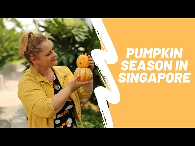 Glamadventure   PUMPKIN SEASON in SINGAPORE