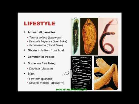 FSc Biology Book1, CH 10, LEC 8: Phylum...