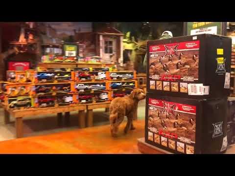 Golden Doodle, Baxter! Golden Doodle Off Leash Dog Training | Off Leash K9 Training