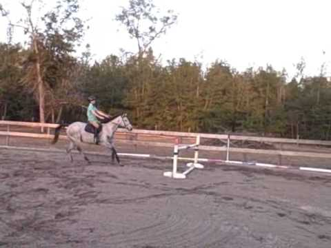 Nevada Skyline: *Eventer *Jumper *Dressag
