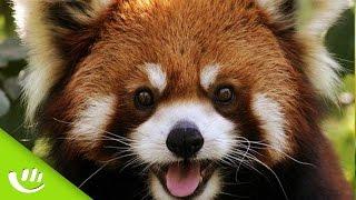 Komm' On - Das süßeste Haustier der Welt