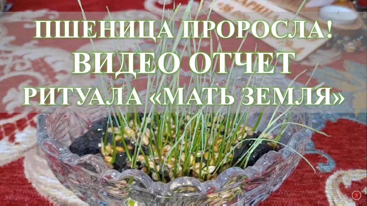 """ПШЕНИЦА ПРОРОСЛА! Видео отчет по ритуалу на плодородие """"Мать Земля"""""""