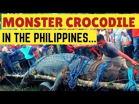 Monster Crocodile in the Philippines The Story of Lolong  Philippines Documentary