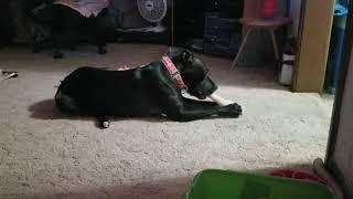 Roxie with Turkey leg 12.5.20