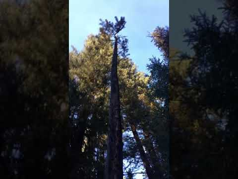 Chech Out This Tree Its Like Half Alive And Half Dead Youtube