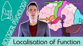 Localisation of Function in the Brain - Biological Psychology [AQA ALevel]