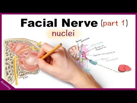 Cranial Nerve Examination: CN 7 Facial nerve.
