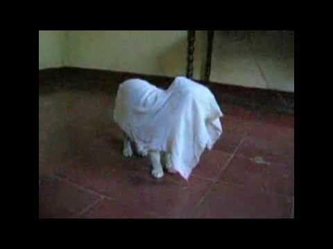 Resultado de imagen para gato fantasma