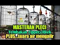 Masteran Pleci Nembak Zipper Ciblek Plus Terapi Pleci Suara Air  Mp3 - Mp4 Download