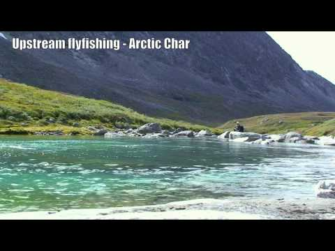 Fly Fishing in Greenland - Arctic Char upstream Fly Fishing