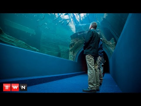Two Oceans Aquarium unveils new Ocean Exhibit