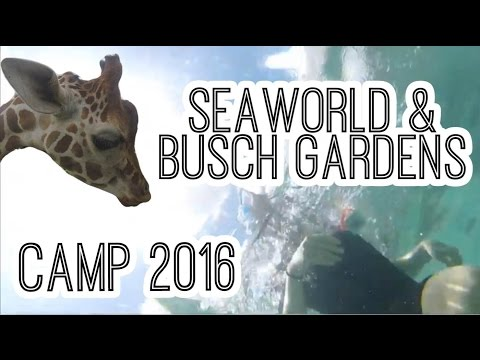 Busch Gardens And Seaworld Tickets Florida Residents Mp4 Mp3 3Gp