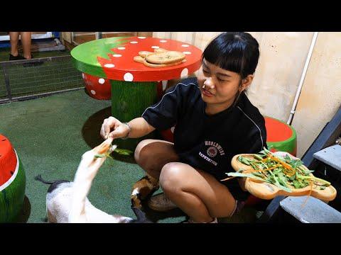 Bangkok Animal Cafe - With Cool Thai Girl!