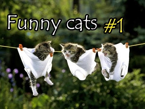 Funny animals planet #1 : Funny cats
