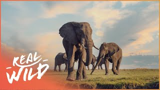 Heart Of The Okavango: Island Of Lions [African Predators & Preys Documentary]  Wild Things