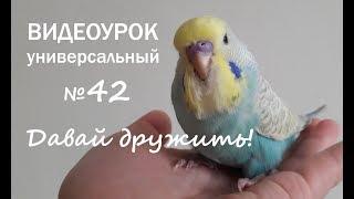 """🎧 Учим попугая говорить. Урок № 42: """"Давай дружить!"""""""