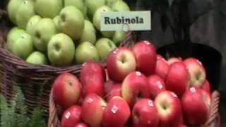jabłka grusze sady odmiany