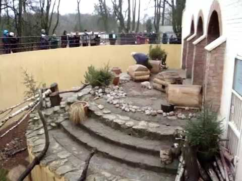 Kauno zoologijos sodas - Lapės