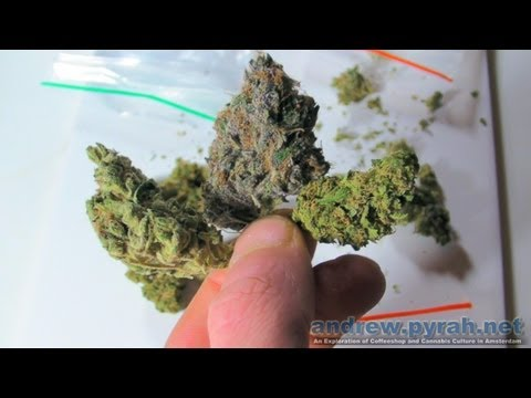 Purple Weed, Orange Buds & Green Ganja - Cannabis Colours (Amsterdam Weed Review)
