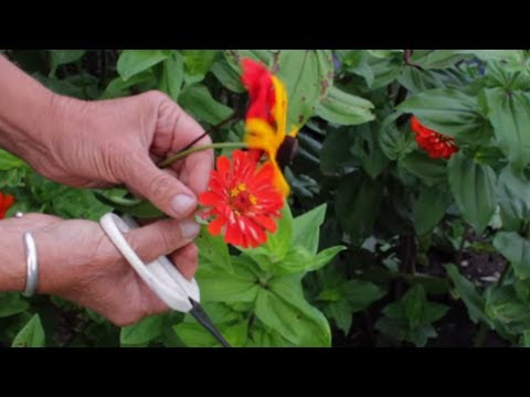 how-to-dry-flowers-|-how-to-preserve-flowers-very-quickly