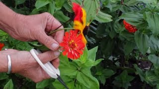 How To Dry Flowers | How To Preserve Flowers Very Quickly