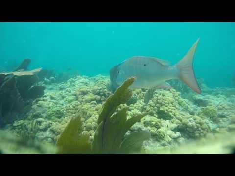Bahia Honda  State Park 6 27 16