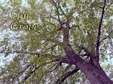 """Elm Grove"" (music)"