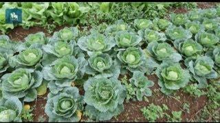 Agricultores cultivam hortas orgânicas em São Mateus