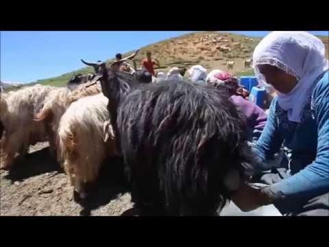 Yürek Yakan Ağlatan Dertli Kürtçe Türküler (Kürtçe Damar Uzun Hava)
