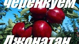 Черенкуем яблоню - Chereches Apple