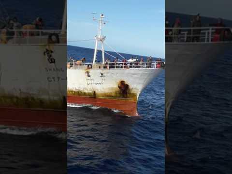 Shang Fu Taiwan Ship   Barko Ni Adel