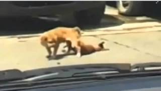 Repeat youtube video Perrito muere SINGANDO