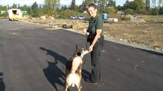 Training Your Canine In The Cowichan Valley - Shaw Tv Duncan