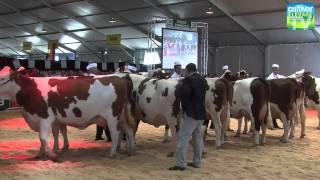 concours montbéliarde Sommet de l'élevage 2011