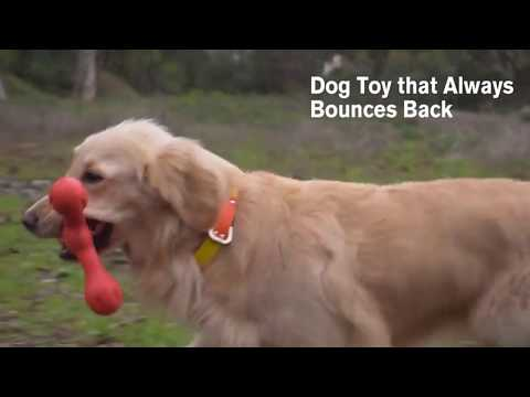 5-dog-toys-your-dog-would-love
