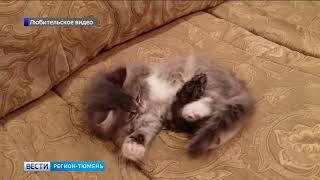 Почему котенок не съел хомяка?