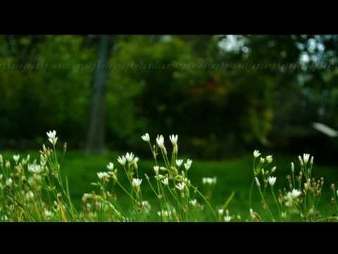 May Masame Ninnenjile, Malayalam melody from film- laptop malayalam