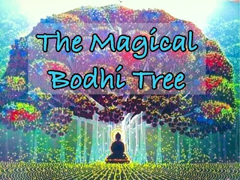 The Magical Bodhi Tree - Children's Bedtime Story/Meditation